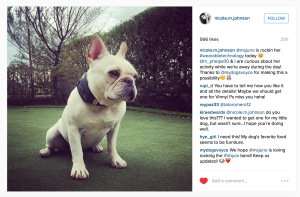 Michael Phelps Dog Instagram